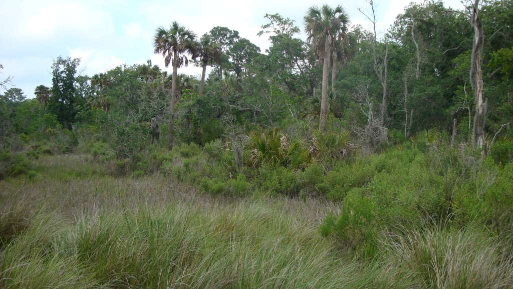 Preserved wetlands at rear of the lot